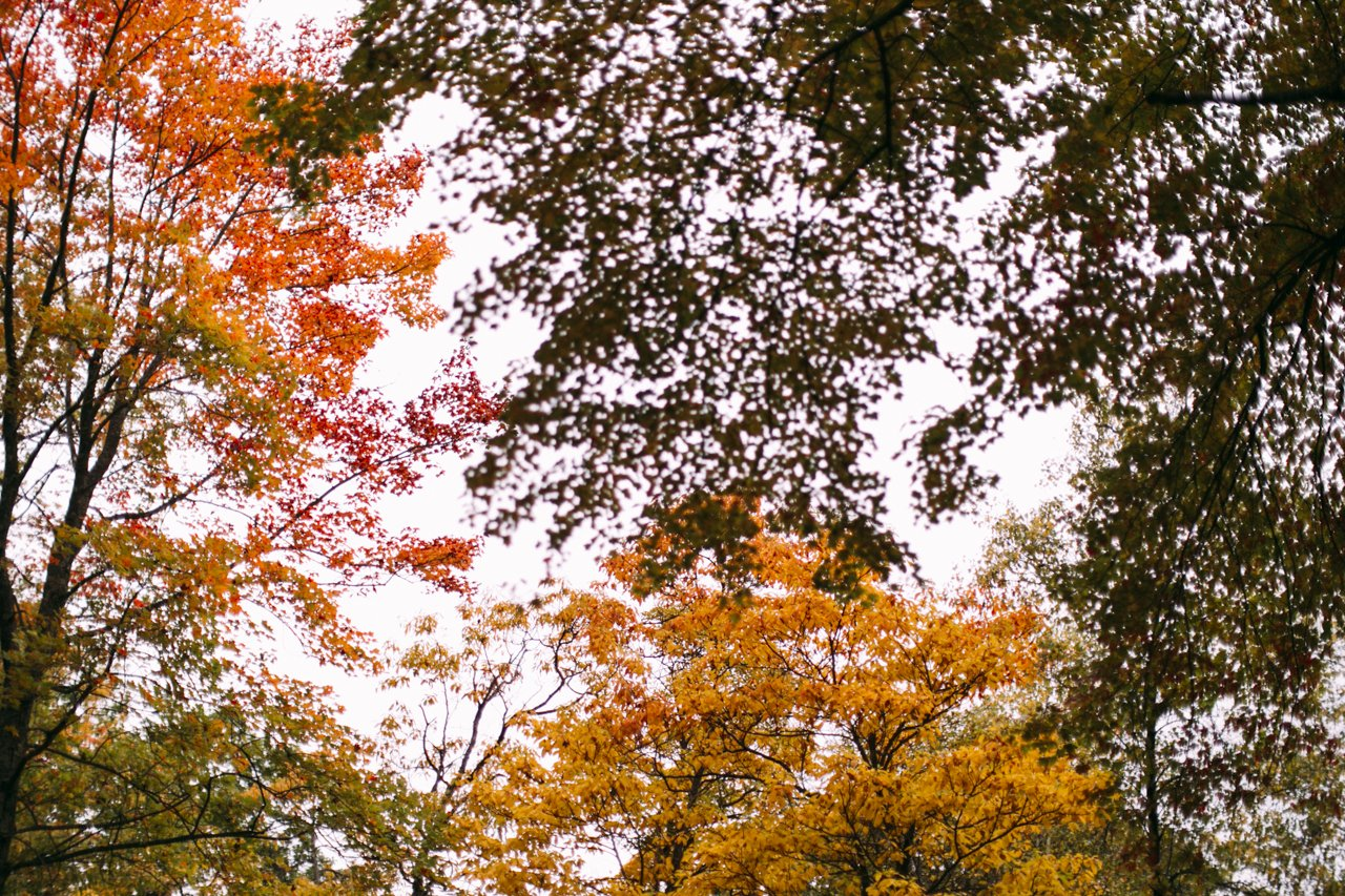 Autumn leaves | streetsandstripes.com