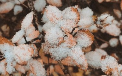 The First Snow Is Here!